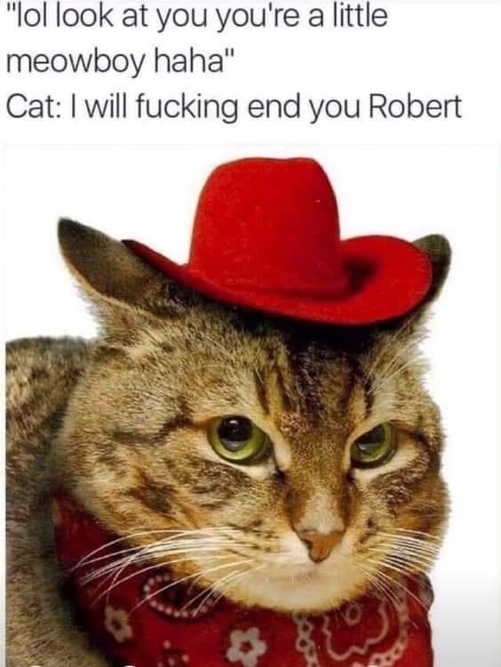 """Cat - """"lol look at you you're a little meowboy haha"""" Cat: I will fucking end you Robert"""