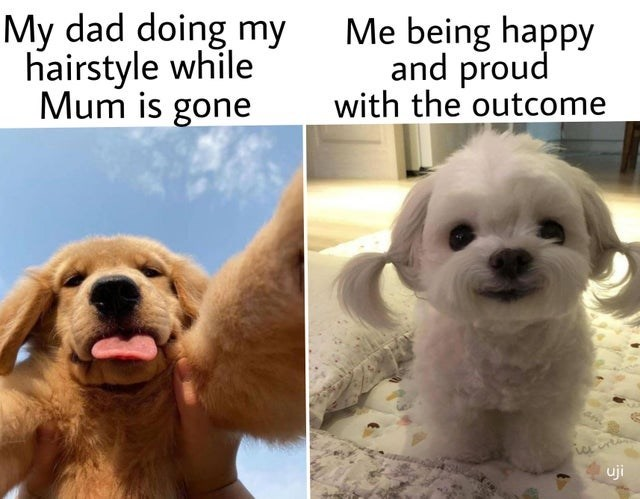 wholesome memes for feeling nice - Nose - My dad doing my hairstyle while Mum is gone Me being happy and proud with the outcome uji