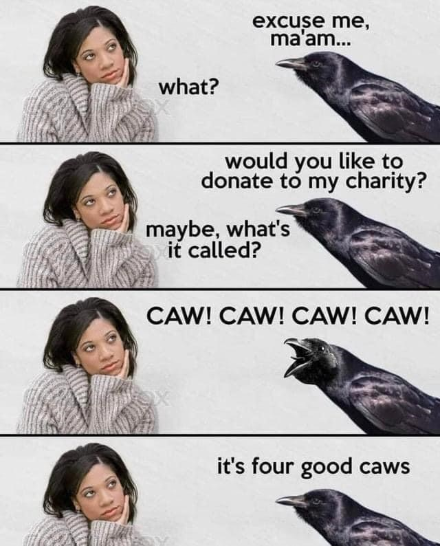 Hair - excuse me, ma'am... what? would you like to donate to my charity? maybe, what's it called? CAW! CAW! CAW! CAW! it's four good caws