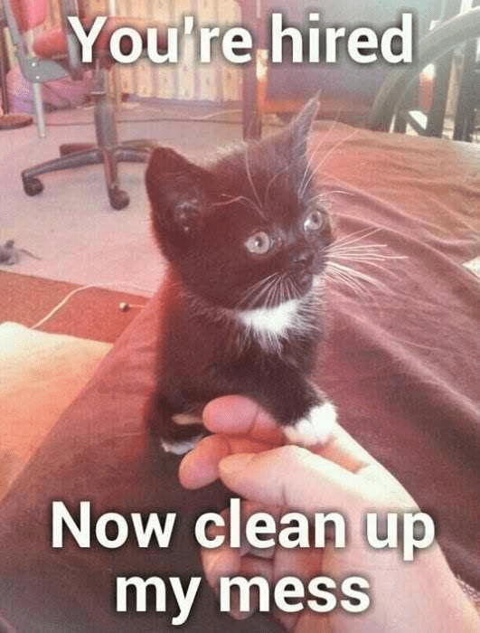 Cat - You're hired Now clean up my mess