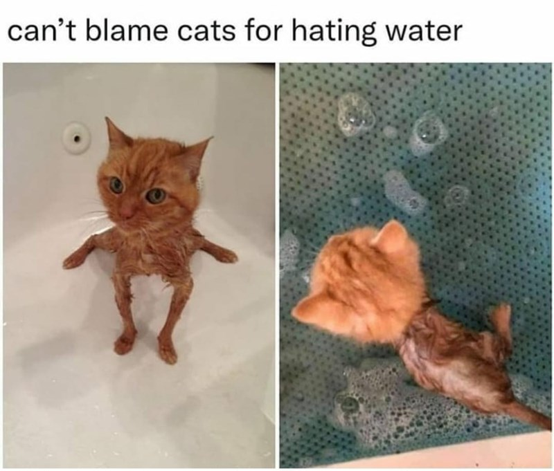 Brown - can't blame cats for hating water