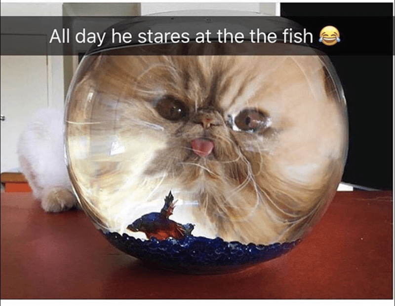Glasses - All day he stares at the the fish a
