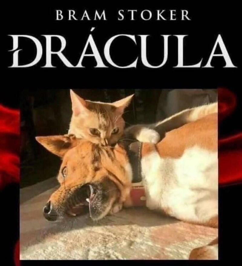 Cat - BRAM STOKER ĐRÁCULA