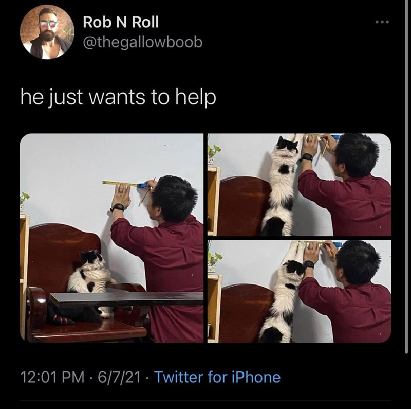 Product - Rob N Roll @thegallowboob he just wants to help 12:01 PM · 6/7/21 · Twitter for iPhone