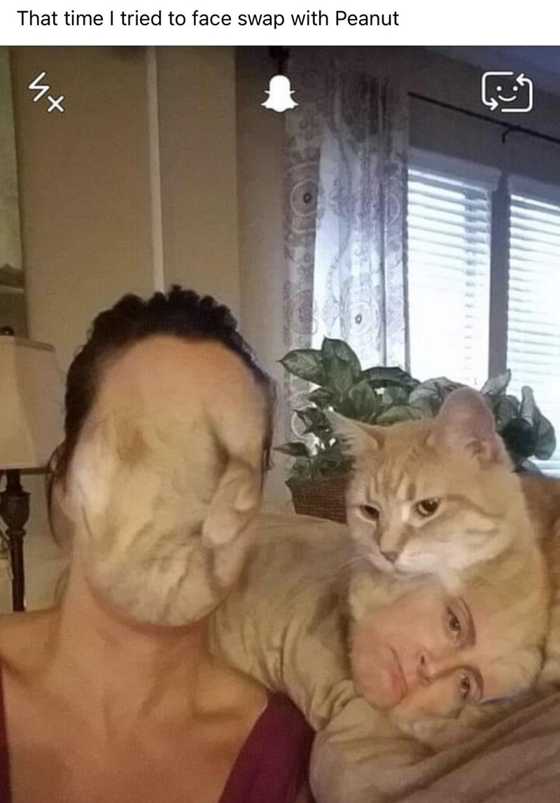 Cat - That time I tried to face swap with Peanut
