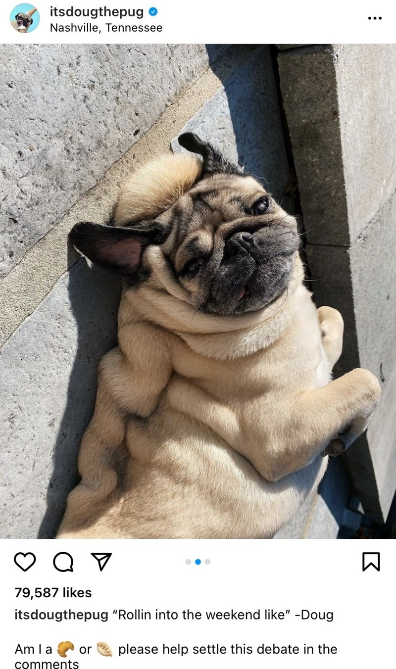 """Dog - itsdougthepug •.. Nashville, Tennessee 79,587 likes itsdougthepug """"Rollin into the weekend like"""" -Doug Am I a please help settle this debate in the or comments"""