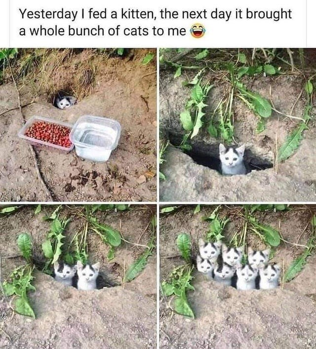 Cat - Yesterday I fed a kitten, the next day it brought a whole bunch of cats to me e