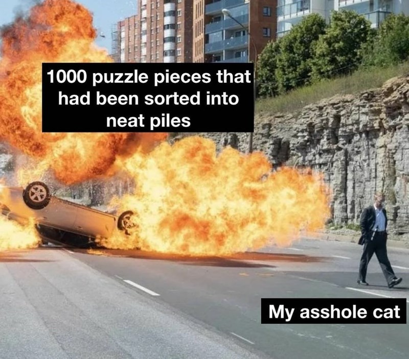 Vehicle - 1000 puzzle pieces that had been sorted into neat piles My asshole cat