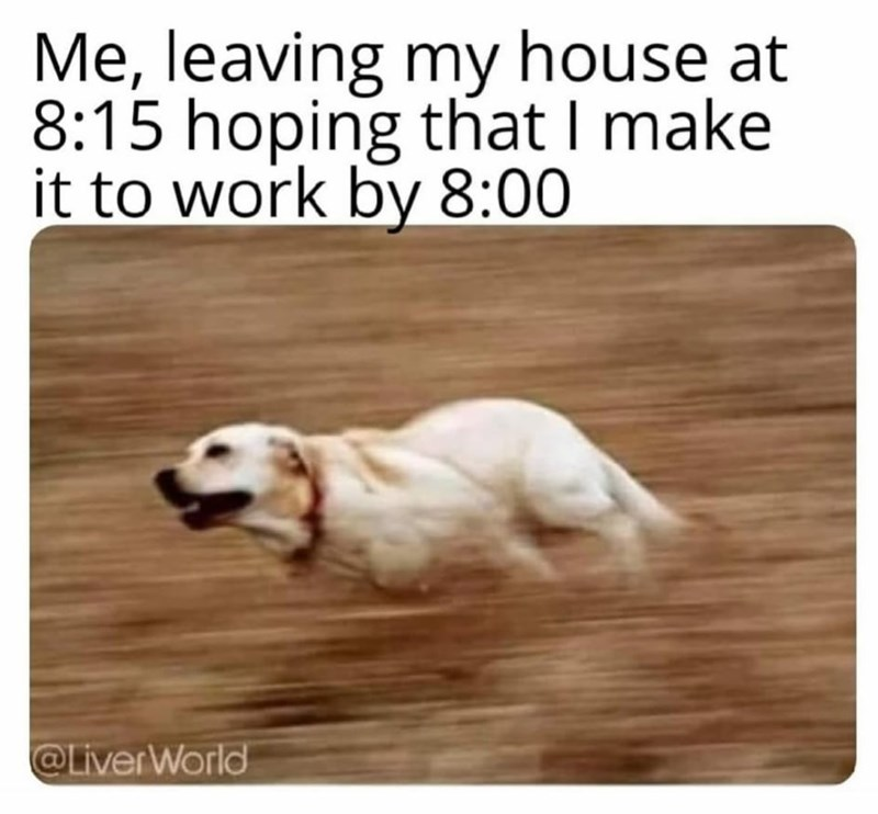 Dog - Me, leaving my house at 8:15 hoping that I make it to work by 8:00 @LiverWorld