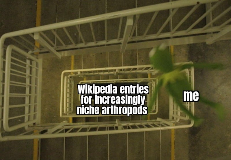 Line - Wikipedia entries for increasingly niche arthropods me
