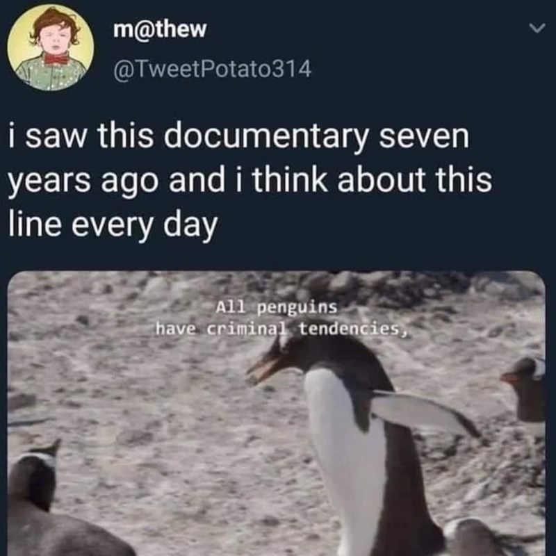 Bird - m@thew @TweetPotato314 i saw this documentary seven years ago and i think about this line every day All penguins have criminal tendencies, >