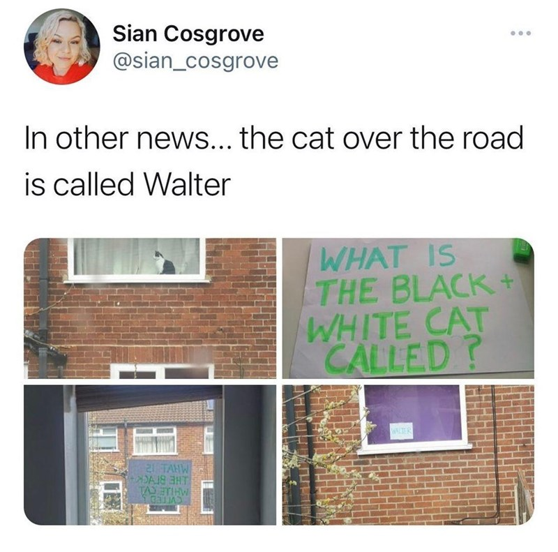Property - Sian Cosgrove @sian_cosgrove In other news... the cat over the road is called Walter WHAT IS THE BLACK + WHITE CAT CALLED? WALTER 21 TAHW TAJETIHW LHE BIYCK CVETED