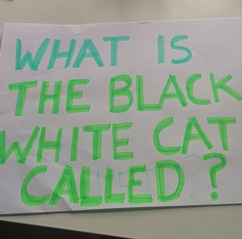 Handwriting - WHAT IS THE BLACK WHITE CAT CALLED?