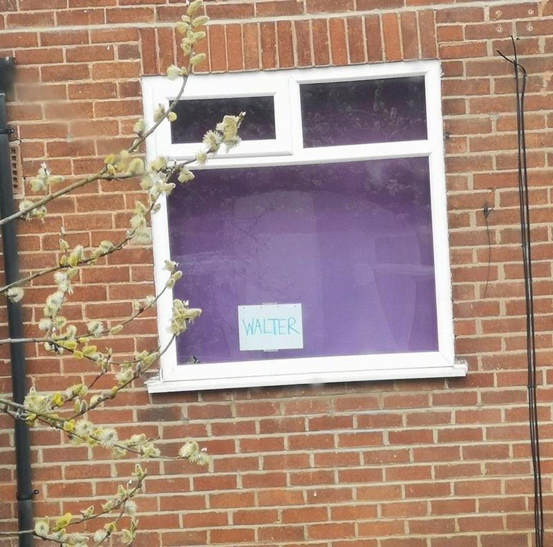 Window - WALTER