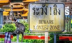 scary warning signs - Plant - ระวัง !ลิง ร S BEWARE MONKET ZONE