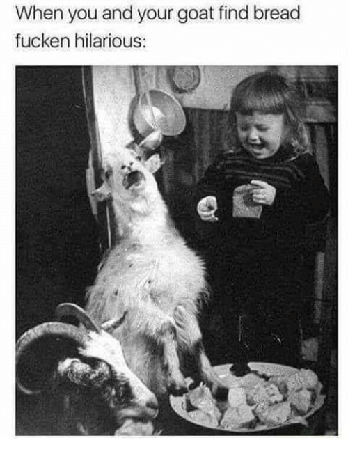 Adaptation - When you and your goat find bread fucken hilarious: