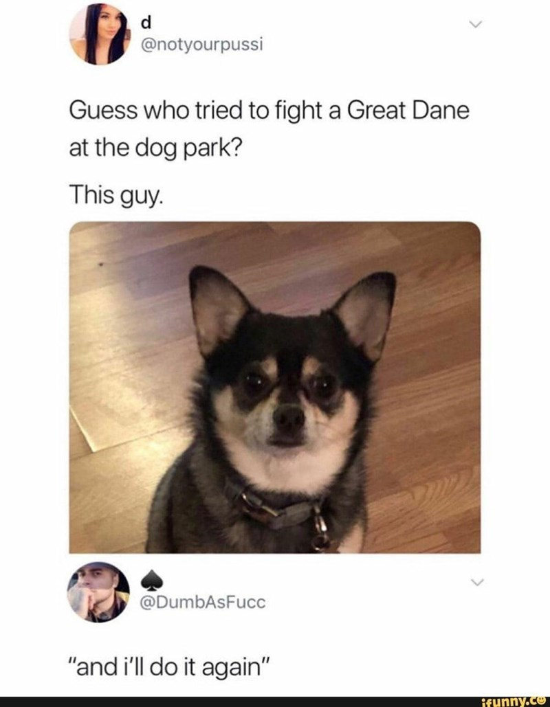 """Dog - d @notyourpussi Guess who tried to fight a Great Dane at the dog park? This guy. @DumbAsFucc """"and i'll do it again"""" ifunny.co"""