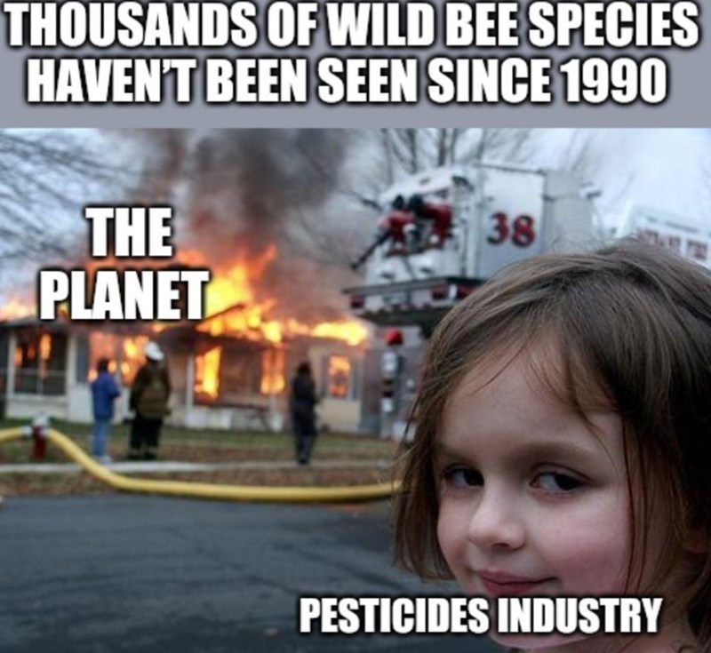 World - THOUSANDS OF WILD BEE SPECIES HAVENT BEEN SEEN SINCE 1990 THE PLANET 38 PESTICIDES INDUSTRY