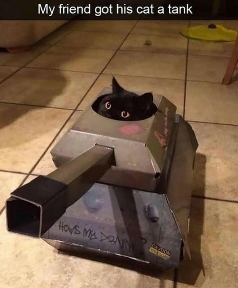Cat - My friend got his cat a tank CAUTION HOWS M RNN