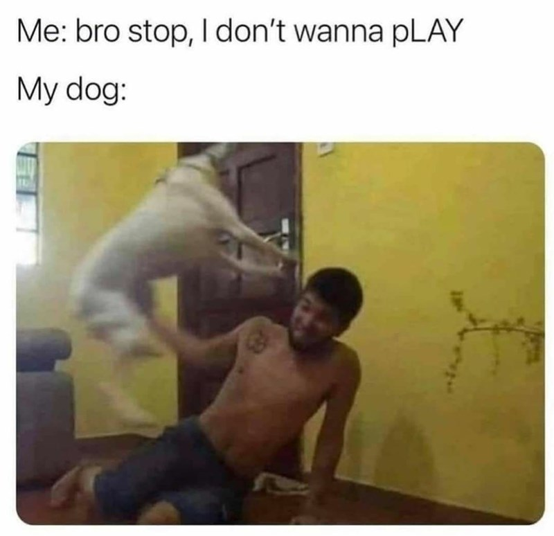 Gesture - Me: bro stop, I don't wanna pLAY My dog: