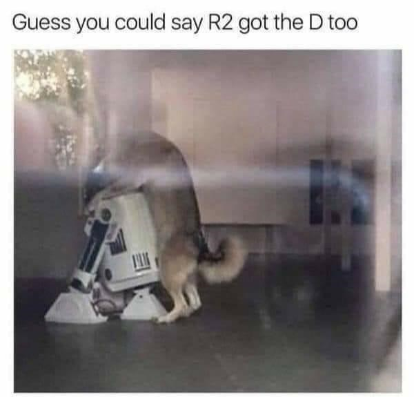 Dog - Guess you could say R2 got the D too