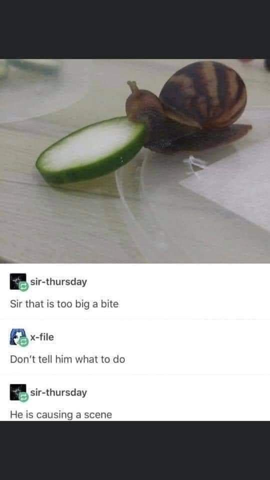 Terrestrial plant - sir-thursday Sir that is too big a bite x-file Don't tell him what to do sir-thursday He is causing a scene
