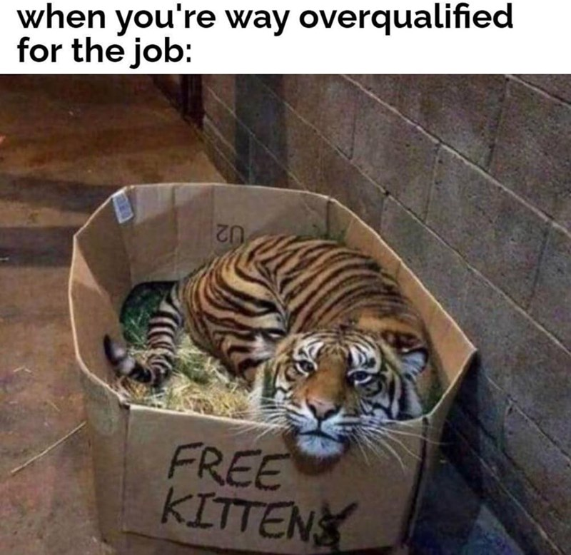 Bengal tiger - when you're way overqualified for the job: 02 FREE KITTEN