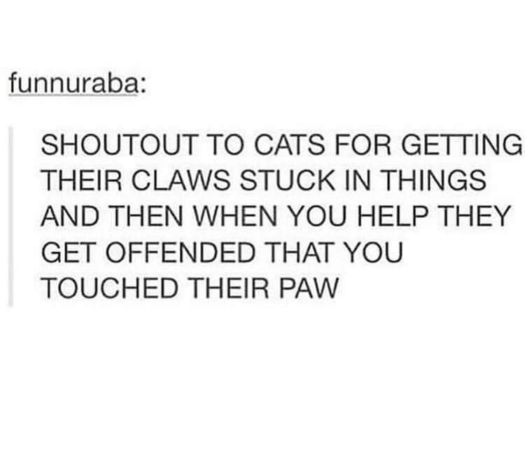 Font - funnuraba: SHOUTOUT TO CATS FOR GETTING THEIR CLAWS STUCK IN THINGS AND THEN WHEN YOU HELP THEY GET OFFENDED THAT YOU TOUCHED THEIR PAW