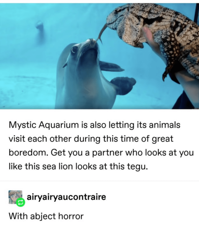 Water - Mystic Aquarium is also letting its animals visit each other during this time of great boredom. Get you a partner who looks at you like this sea lion looks at this tegu. airyairyaucontraire With abject horror
