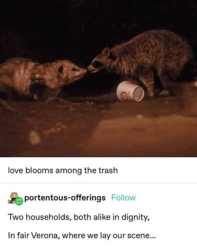 Vertebrate - love blooms among the trash portentous-offerings Follow Two households, both alike in dignity, In fair Verona, where we lay our scene...