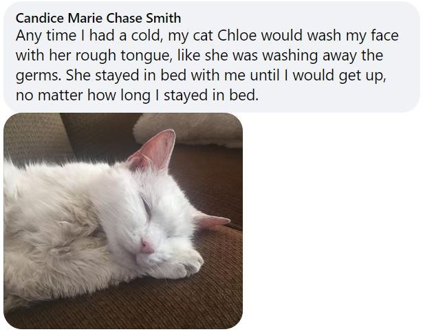 Cat - Candice Marie Chase Smith Any time I had a cold, my cat Chloe would wash my face with her rough tongue, like she was washing away the germs. She stayed in bed with me until I would get up, no matter how long I stayed in bed.