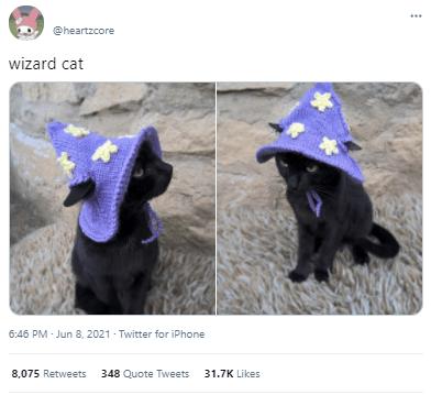 Purple - @heartzcore wizard cat 6:46 PM - Jun 8, 2021 - Twitter for iPhone 8,075 Retweets 348 Quote Tweets 31.7K Likes