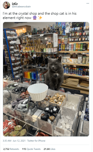 Product - Eice Pericabeancobain I'm at the crystal shop and the shop cat is in his element right now 3:35 AM - Jun 12, 2021 - Twitter for iPhane 2,752 Retweets 115 Quate Tweets 21.6K Likes