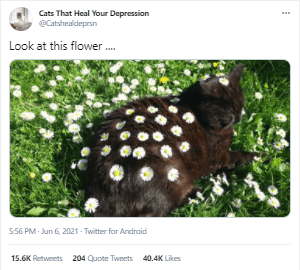 Organism - Cats That Heal Your Depression @Catshealdeprsn Look at this flower . 5:56 PM - Jun 6, 2021 - Twitter for Android 15.6K Retweets 204 Quote Tweets 40.4K Likes