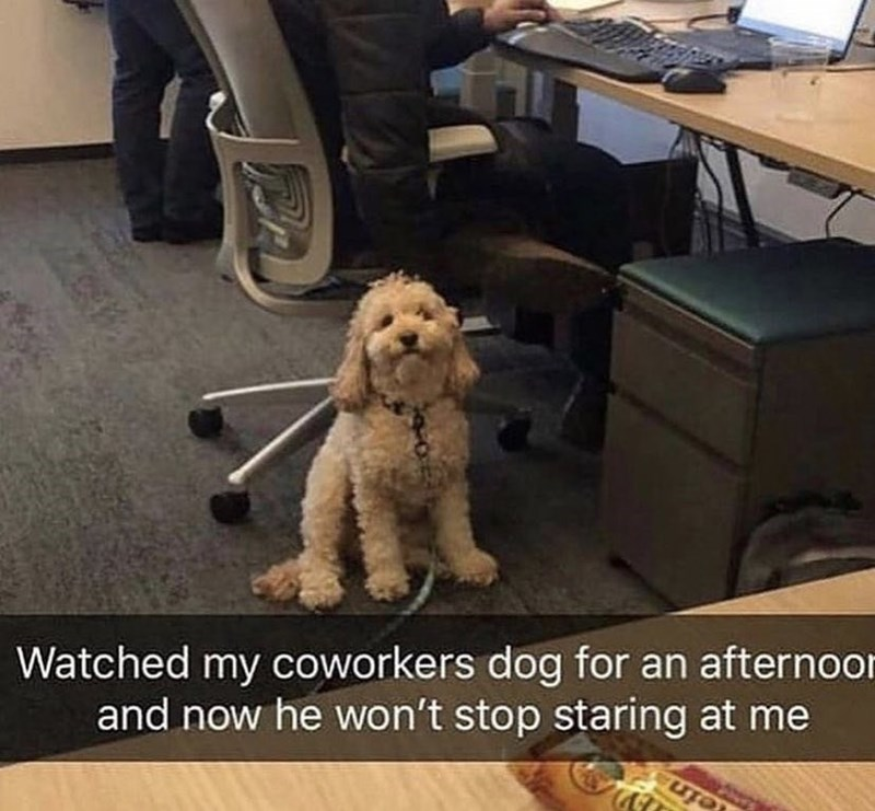 Glasses - Watched my coworkers dog for an afternoor and now he won't stop staring at me