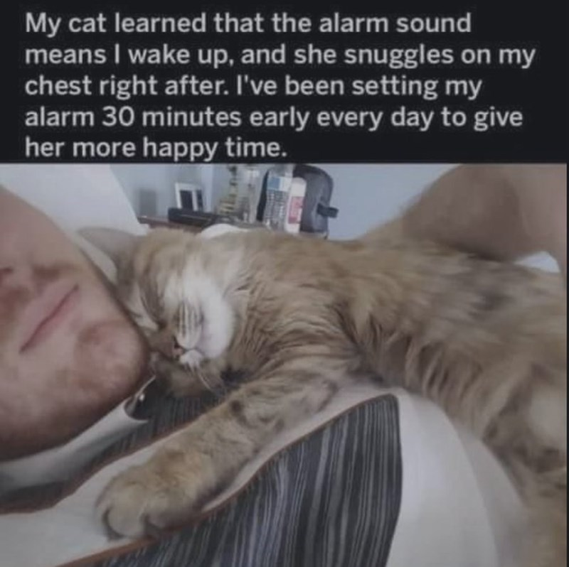 Cat - My cat learned that the alarm sound means I wake up, and she snuggles on my chest right after. I've been setting my alarm 30 minutes early every day to give her more happy time.