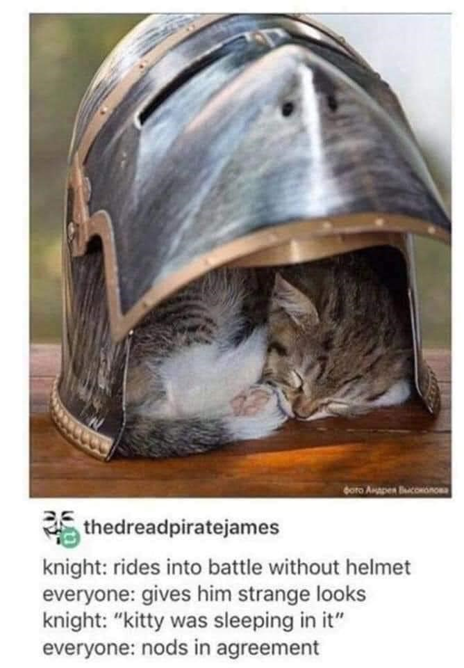 """Cat - doro Anapen BucoHonOsa thedreadpiratejames knight: rides into battle without helmet everyone: gives him strange looks knight: """"kitty was sleeping in it"""" everyone: nods in agreement"""