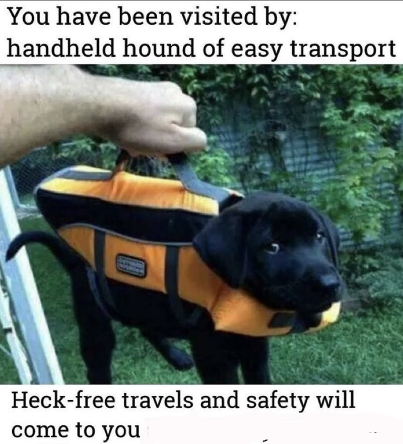 Dog - You have been visited by: handheld hound of easy transport Heck-free travels and safety will come to you
