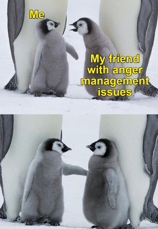 Bird - Me My friend with anger management issues