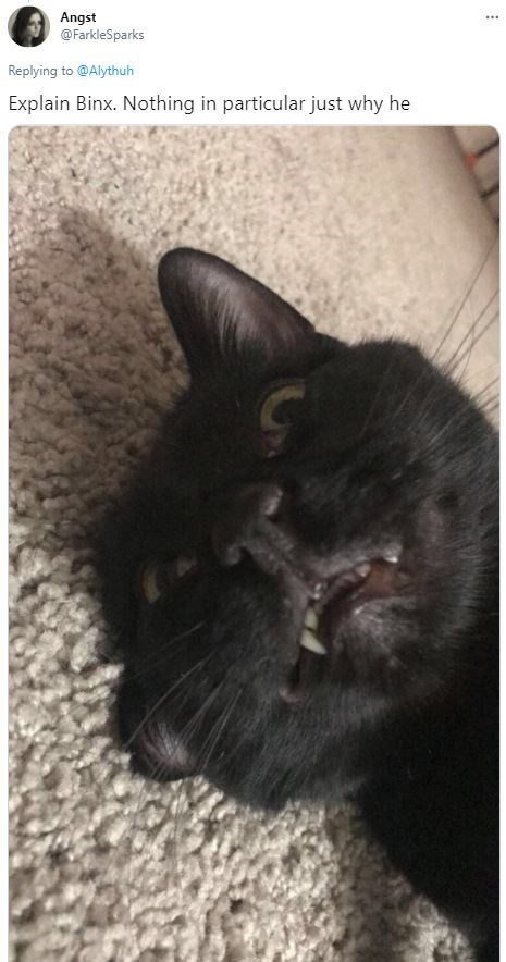 Cat - Angst @FarkleSparks ... Replying to @Alythuh Explain Binx. Nothing in particular just why he