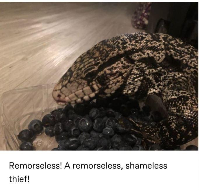 Wood - Remorseless! A remorseless, shameless thief!