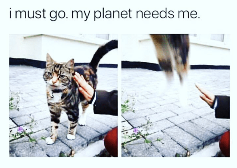 Cat - i must go. my planet needs me.