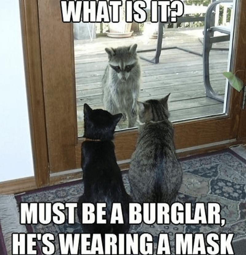 Cat - WHAT IS IT? MUST BE A BURGLAR, HE'S WEARINGA MASK