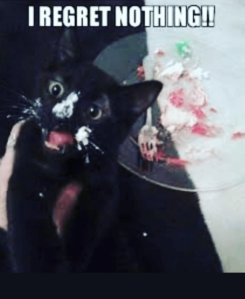 Cat - I REGRET NOTHING!!