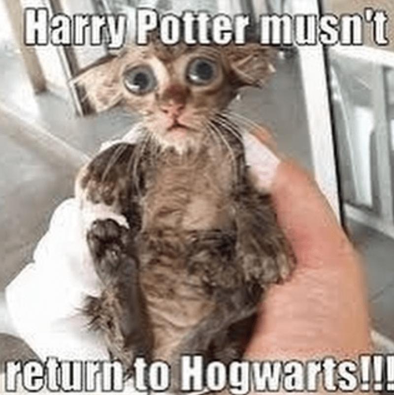 Photograph - Harry Potter muşn't returh to Hogwarts!!