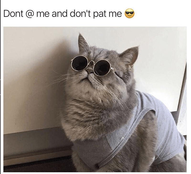Glasses - Dont @ me and don't pat me