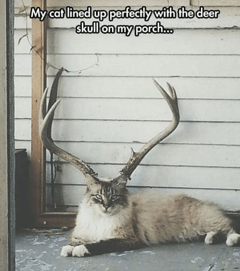 Natural material - My cat lined up perfectly with the deer skull on my porch..