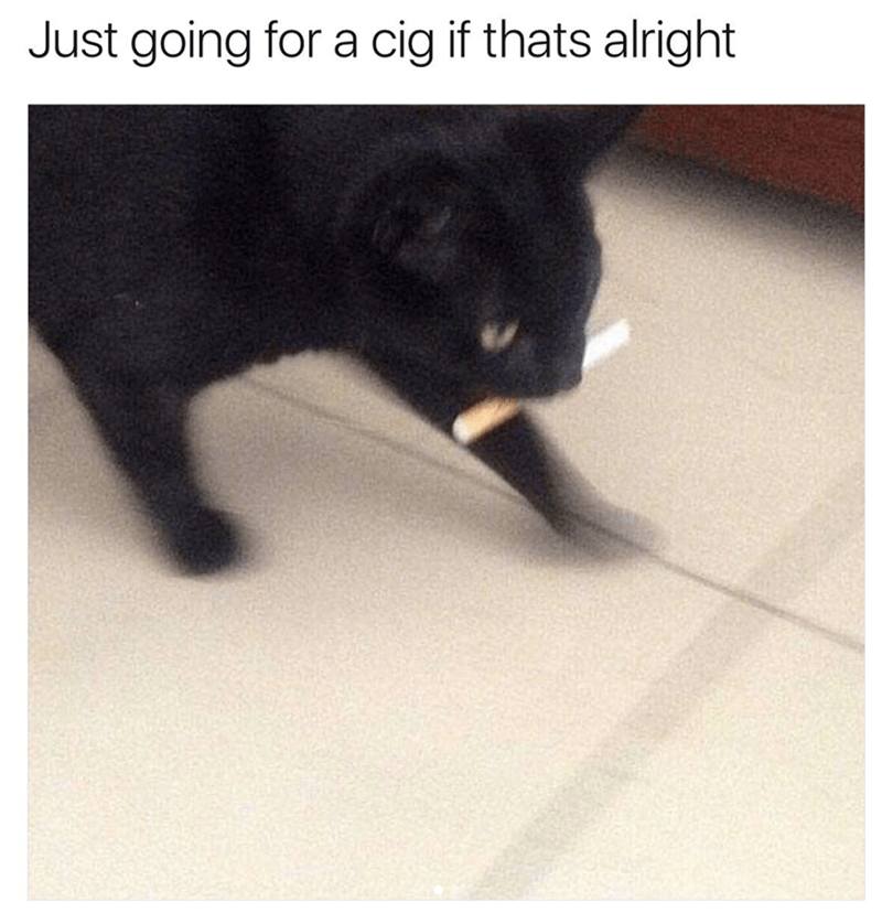 Cat - Just going for a cig if thats alright