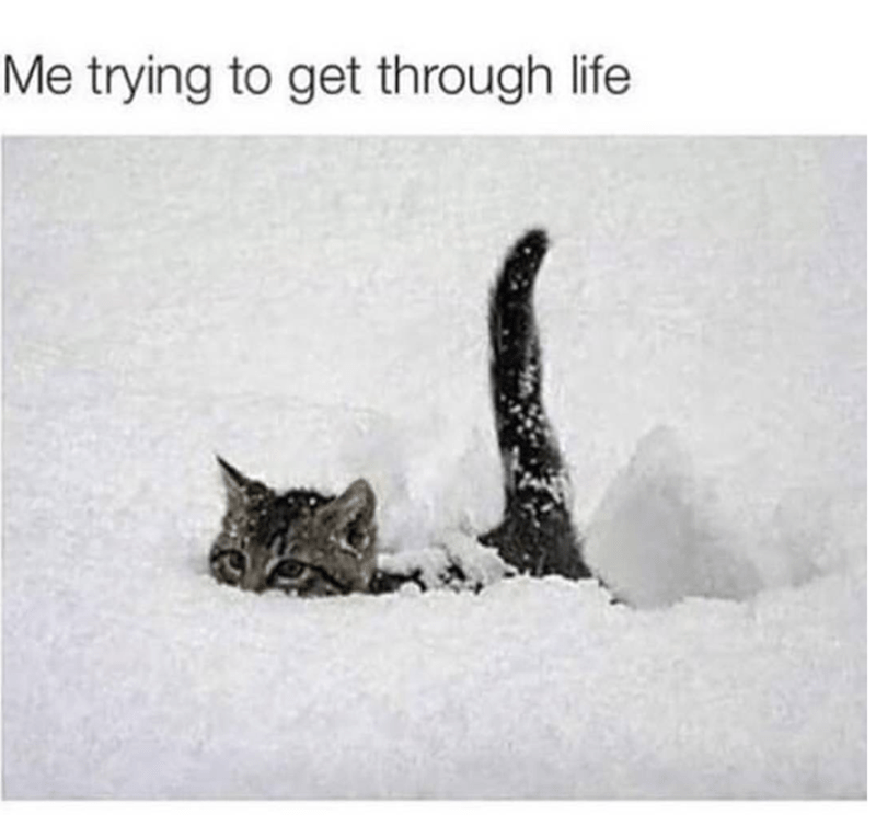 Cat - Me trying to get through life