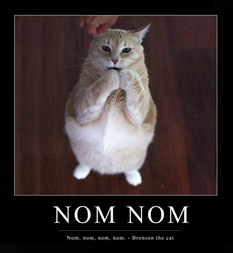 Cat - NOM NOM Nom, nom, nom, nom. Bronson the cat